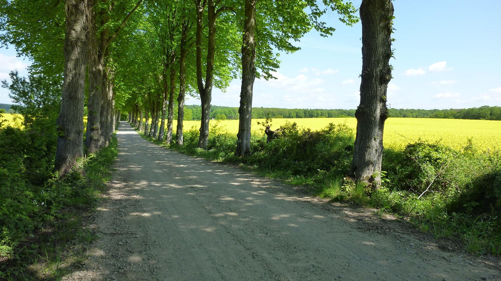 malerhaus-kuhse-spazier-und-wanderwege